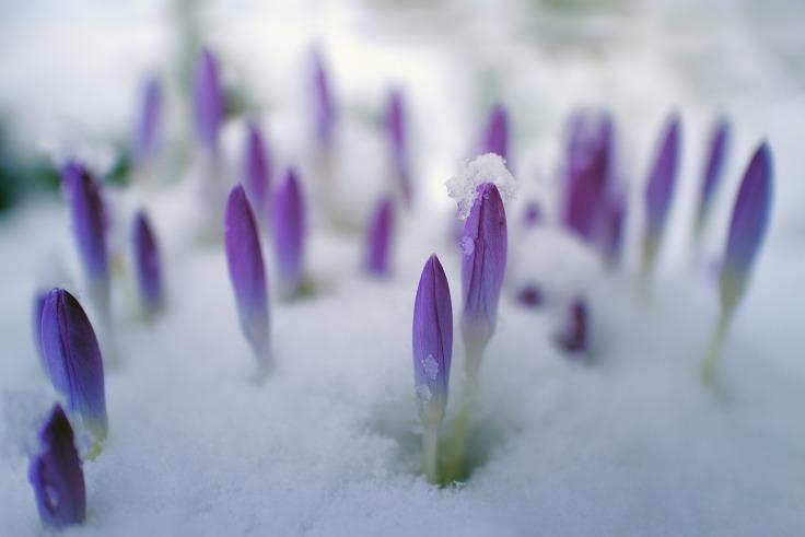 flower-3161201_1920